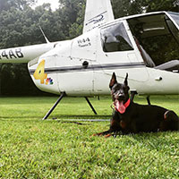 Acclimating your dog to Aircraft
