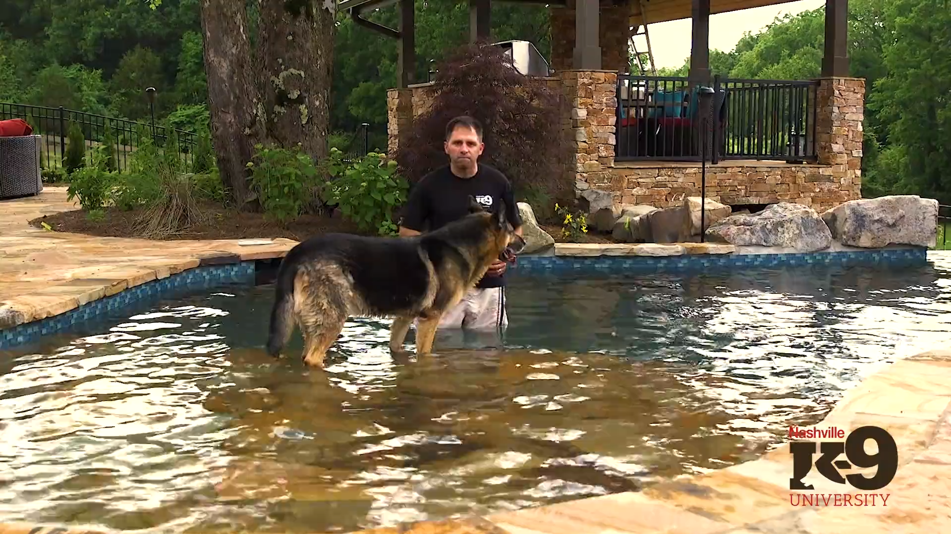 Introducing your dog to swimming – Getting acclimated to water