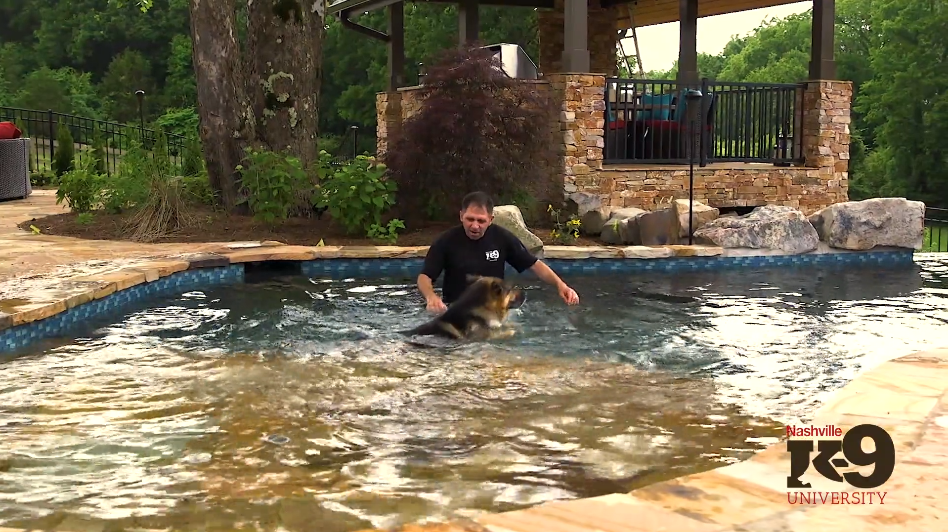 Introducing your dog to swimming- Into the water we go…