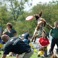 Teaching your dog to play ball or frisbee