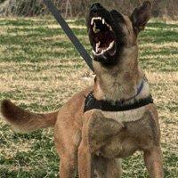 Aggressive Dog Management
