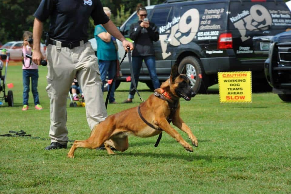 Pro active dog