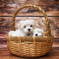 Purchasing a dog from a breeder: what to look for?