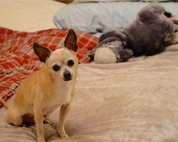 Dogs in bed: A Big No-No!