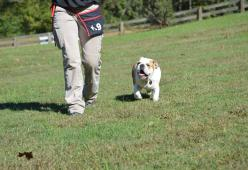 Teaching your dogs off leash and the impact