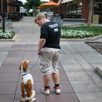 Shaping your dog into a training position