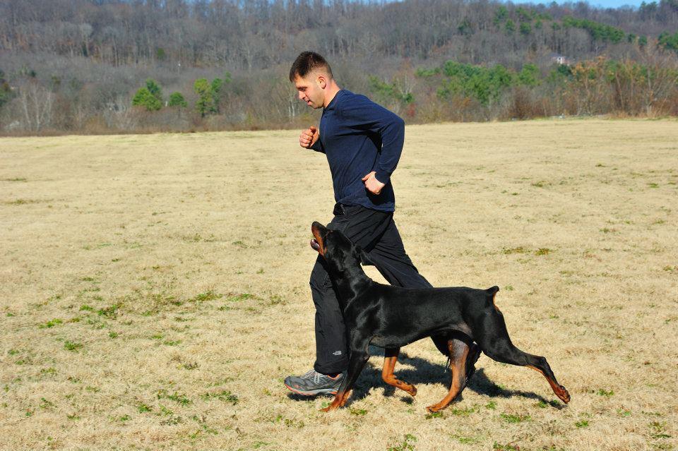 Teaching off leash heel